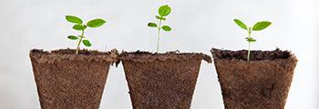 2014: La semilla germinó